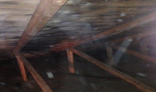 mould in attic