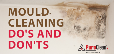how to remove mould