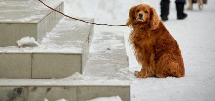 Keep Pets Safe During a Snowstorm