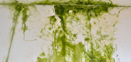 green mould