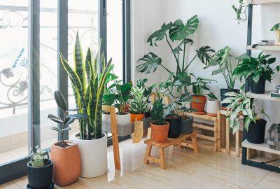 mould-houseplant