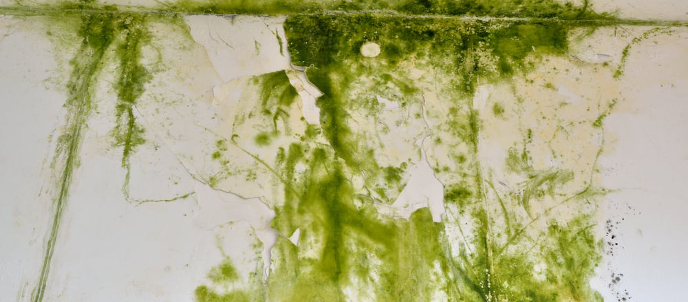 green-mould