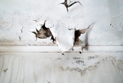 mould on walls